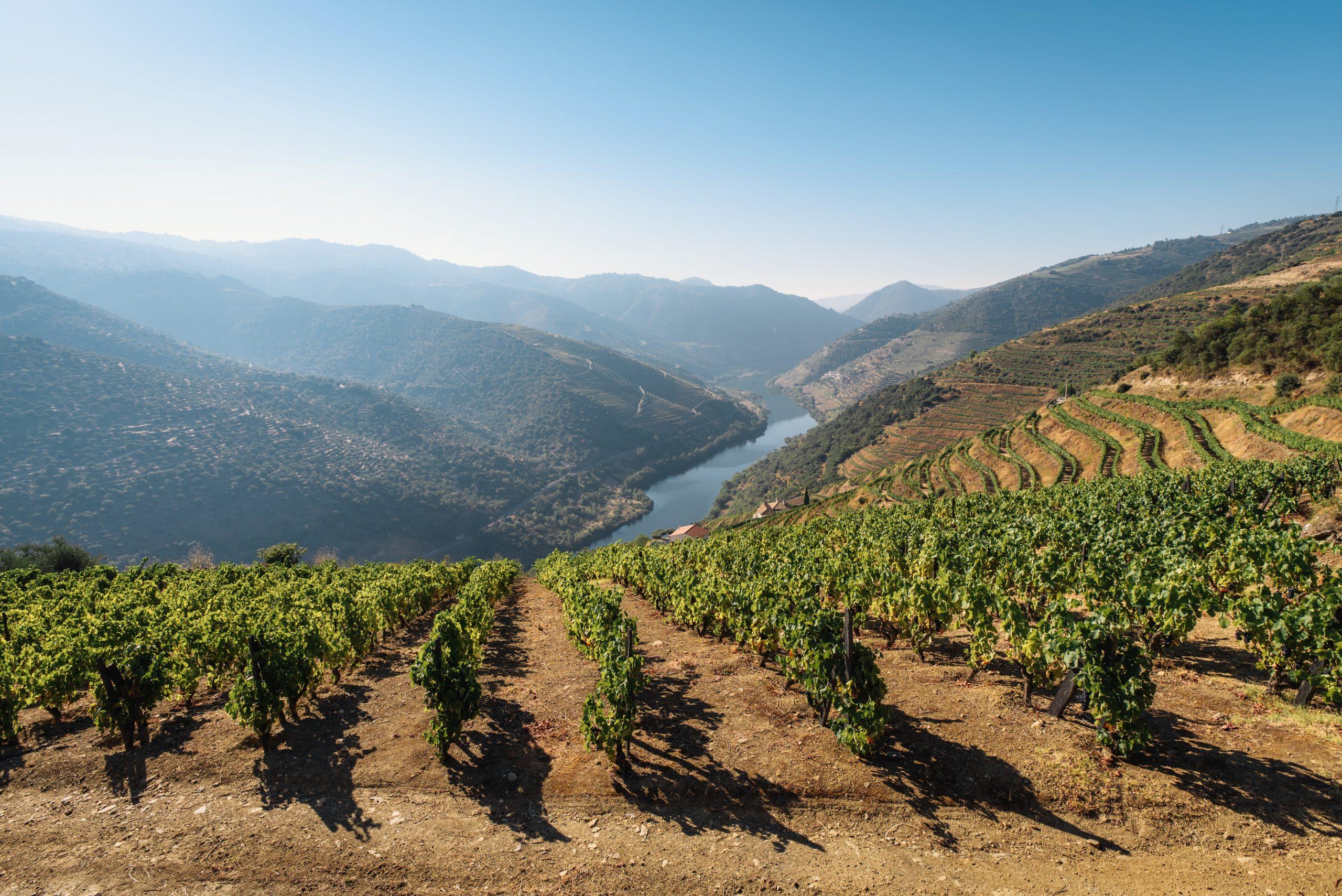 Producteurs de Vins et Spiritueux